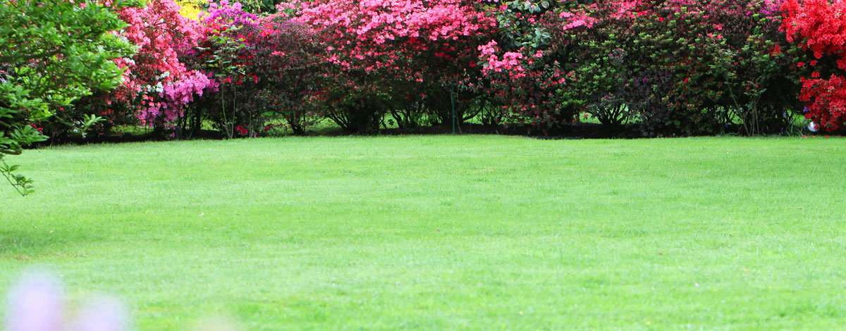 lawn-fertilization-dumfries-va